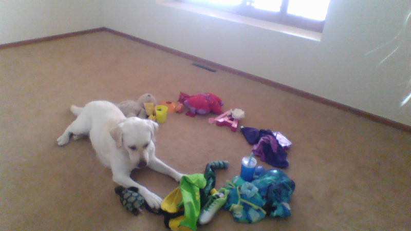 Puppy color wheel
